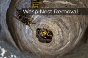 Wasp Nest Removal Harrow